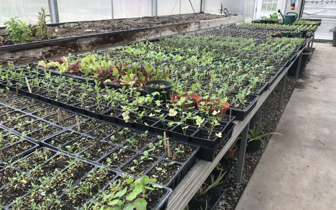 Plant Sale on Friday, May 17th
